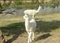 10 quelques lamas du domaine de shanti