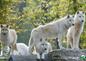 à proximité: parc animalier