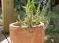 Nombreux cactus