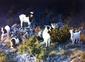 visite de nos chèvres