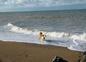 Roni à la mer