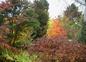 jardin en automne 2