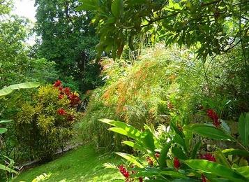 G te les orchid es de sainte anne gite piscine for Jardin tropical guadeloupe