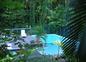 La piscine au coeur de la végétation