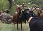 Chèvres de Hugues